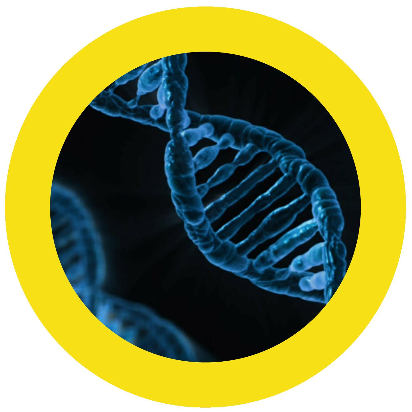 Hübner Prevent Ihre Gene kennen die Antwort